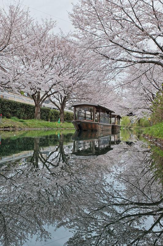 桜 2020_f0021869_00102264.jpg