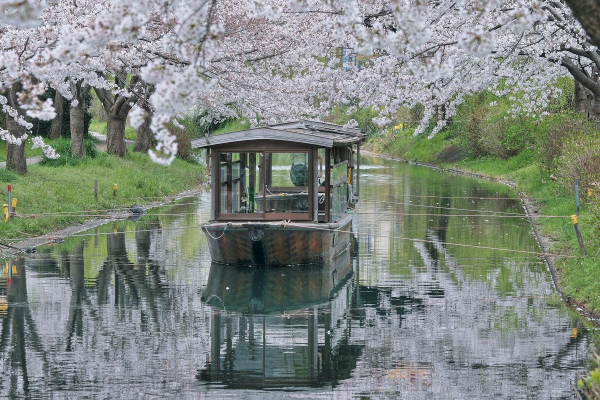 桜 2020_f0021869_22520952.jpg