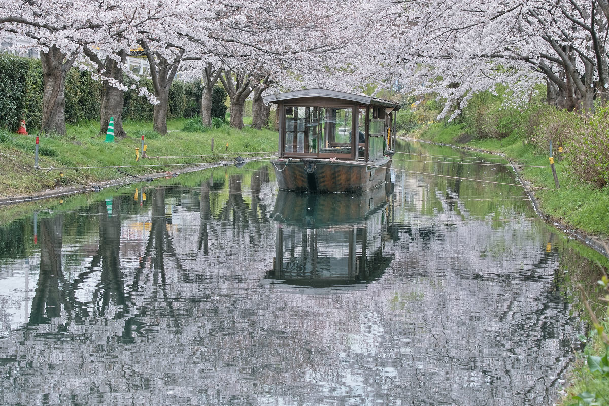 桜 2020_f0021869_22520996.jpg
