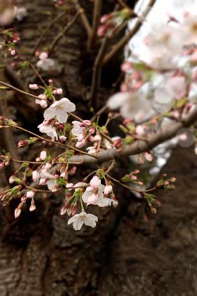 春を見送る_e0137277_21160581.jpg
