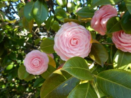 3密避けてこっそりお花見散歩_e0355177_09254061.jpg