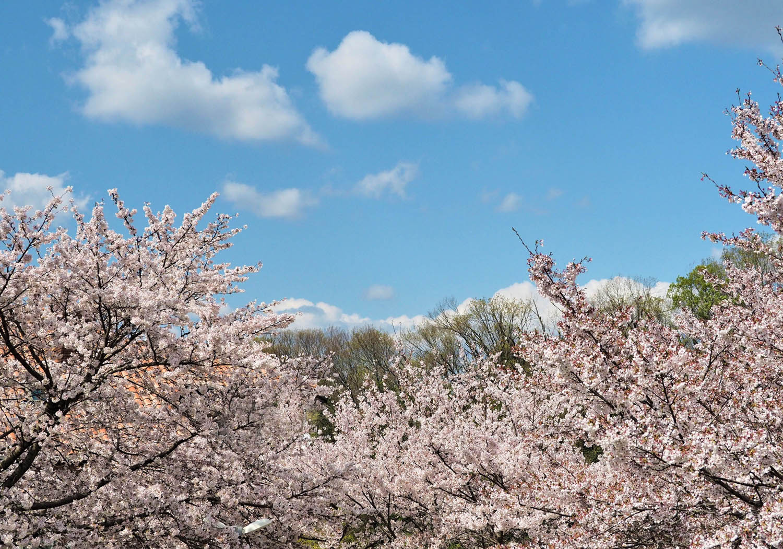 桜に野鳥が_e0254493_23451647.jpg