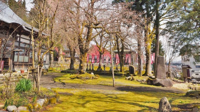 千手院の枝垂れ桜が開花しました_c0336902_18285270.jpg
