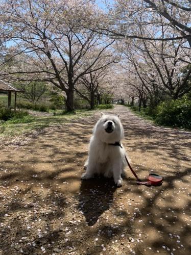 毎日の犬の散歩は出かけていいのよ 4月7日 [火]_e0018604_18044630.jpg