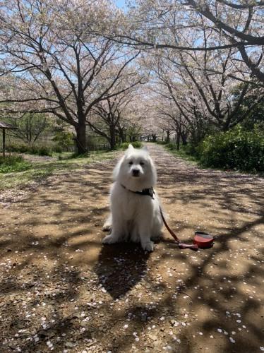 毎日の犬の散歩は出かけていいのよ 4月7日 [火]_e0018604_18050628.jpg