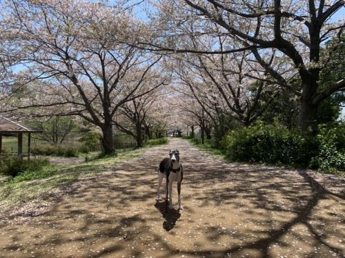毎日の犬の散歩は出かけていいのよ 4月7日 [火]_e0018604_18052271.jpg