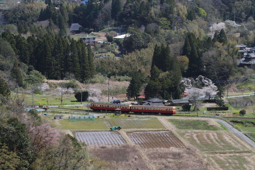 日本の山里、日本の春 - 2020年桜春・小湊鉄道 -_b0190710_22390894.jpg