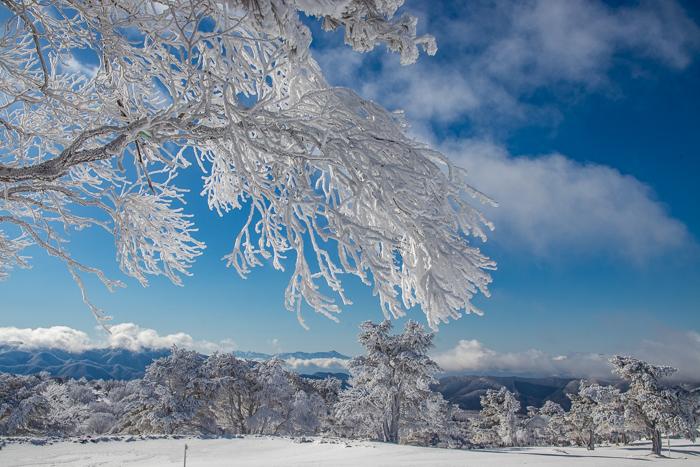 雲に浮かぶ北アルプス 根子岳_b0244811_09283431.jpg