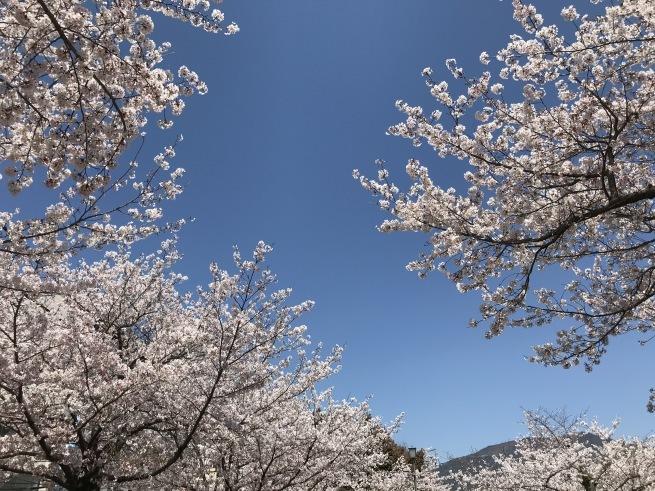 桜の下で_a0390917_22162702.jpg