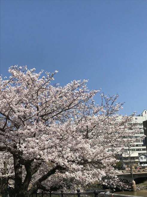桜の下で_a0390917_22164242.jpg