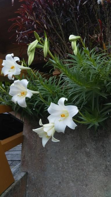 春の花やら_f0121321_18341222.jpg