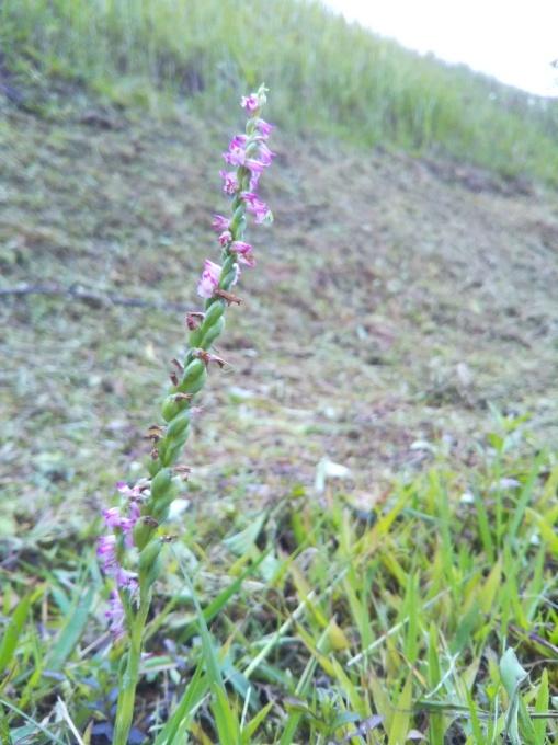 春の花やら_f0121321_18341366.jpg