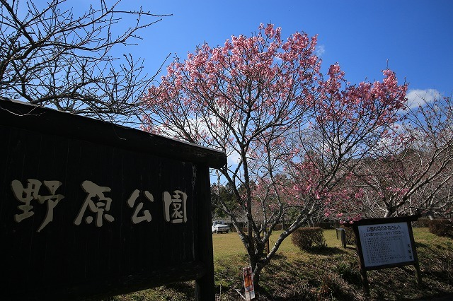 野原公園散策(その1)(撮影:3月20日)_e0321325_19300979.jpg