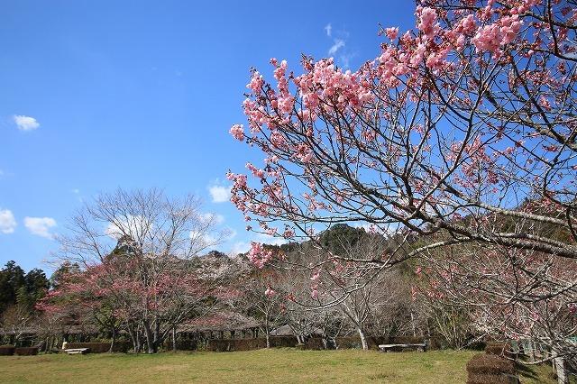野原公園散策(その1)(撮影:3月20日)_e0321325_19302291.jpg