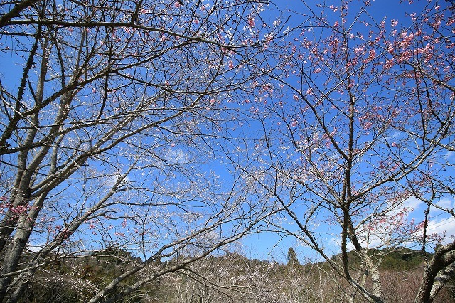 野原公園散策(その1)(撮影:3月20日)_e0321325_19303410.jpg