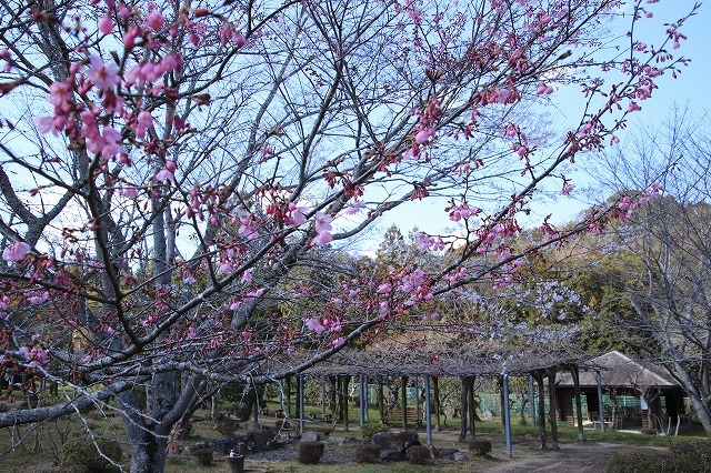 野原公園散策(その1)(撮影:3月20日)_e0321325_19304693.jpg