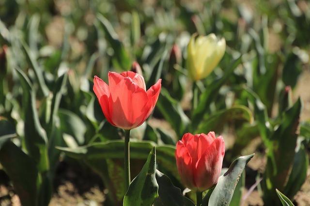 野原公園散策(その1)(撮影:3月20日)_e0321325_19333260.jpg