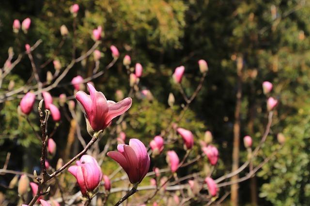 野原公園散策(その2)(撮影:3月20日)_e0321325_19480446.jpg