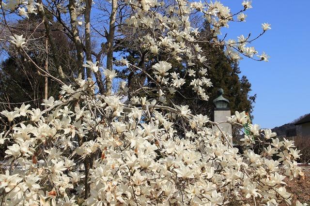 野原公園散策(その2)(撮影:3月20日)_e0321325_19503794.jpg
