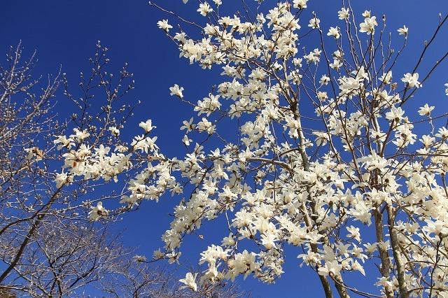 野原公園散策(その2)(撮影:3月20日)_e0321325_19505146.jpg
