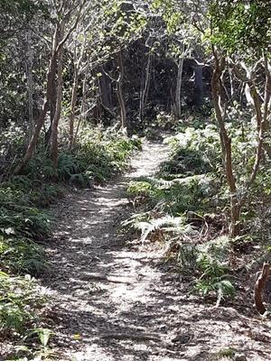 志摩 横山へ登りました。_f0129726_18345227.jpg