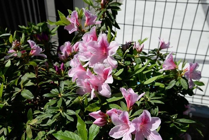 季節の花_f0129627_10082995.jpg
