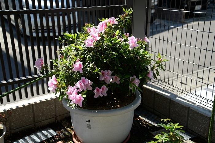 季節の花_f0129627_10115956.jpg