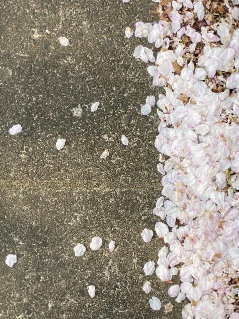 4月の熊本クラニオ個人セッション、再開しました。_d0315734_14305366.jpg