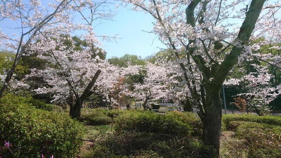 東山動植物園へ行ってきました!~桜の回廊編~_f0373339_16114705.jpg