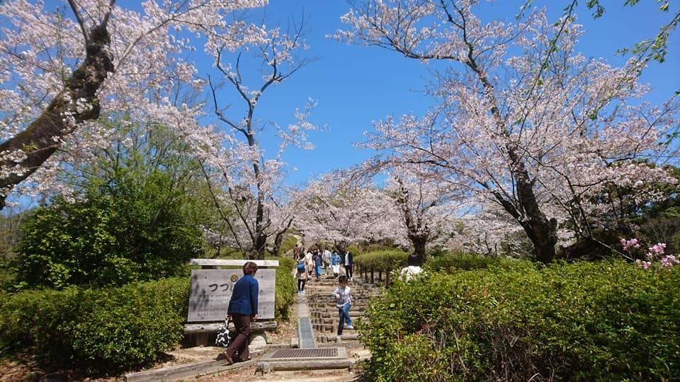 東山動植物園へ行ってきました!~桜の回廊編~_f0373339_16114706.jpg