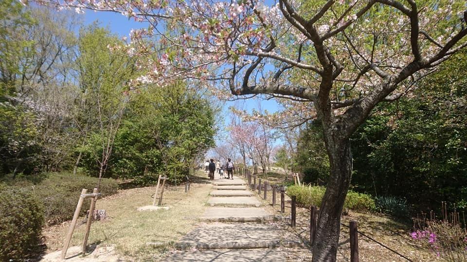 東山動植物園へ行ってきました!~桜の回廊編~_f0373339_16114744.jpg