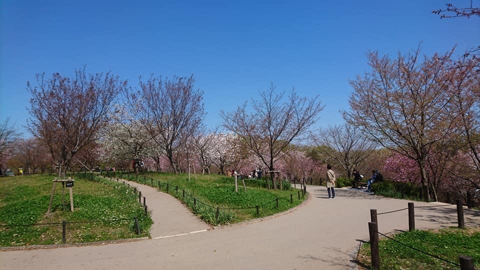 東山動植物園へ行ってきました!~桜の回廊編~_f0373339_16114862.jpg