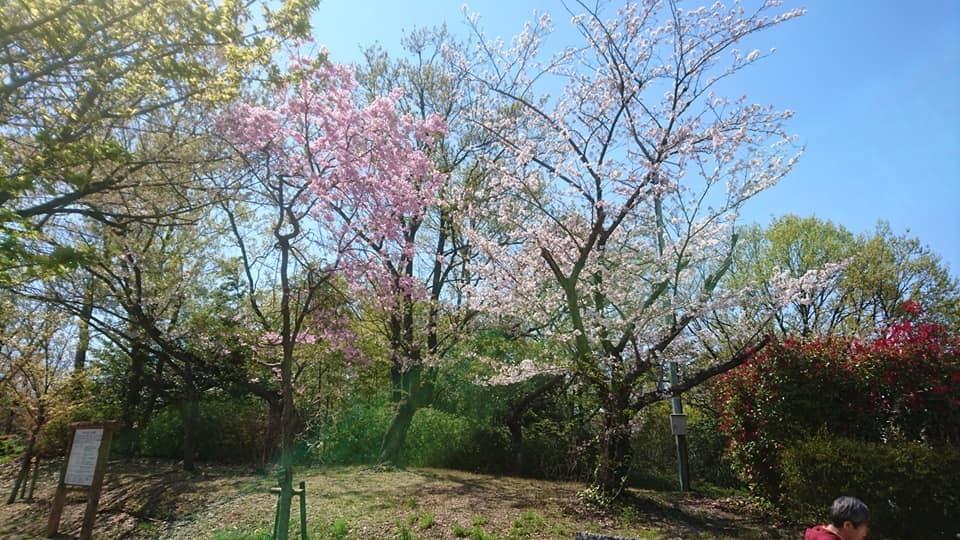 東山動植物園へ行ってきました!~桜の回廊編~_f0373339_16131030.jpg