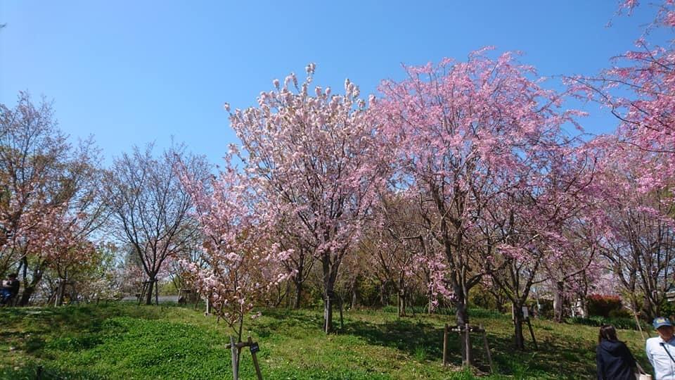 東山動植物園へ行ってきました!~桜の回廊編~_f0373339_16131049.jpg