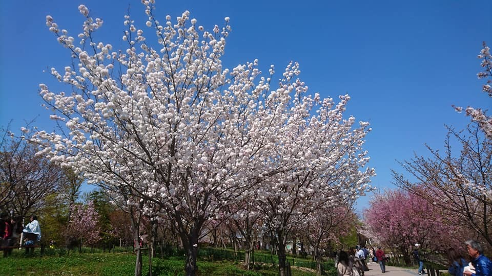 東山動植物園へ行ってきました!~桜の回廊編~_f0373339_16131065.jpg