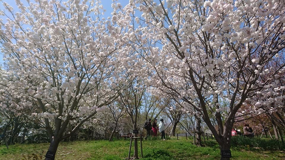 東山動植物園へ行ってきました!~桜の回廊編~_f0373339_16131095.jpg