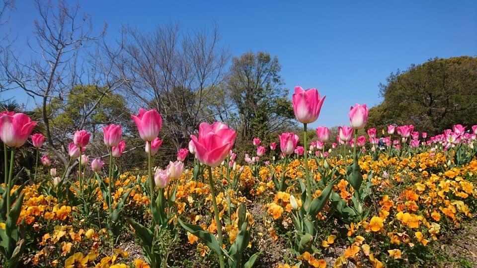 東山動植物園へ行ってきました!~桜の回廊編~_f0373339_16231210.jpg