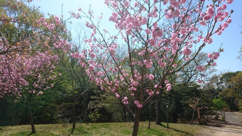 東山動植物園へ行ってきました!~桜の回廊編~_f0373339_16231217.jpg