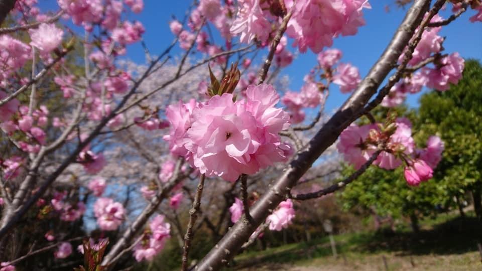 東山動植物園へ行ってきました!~桜の回廊編~_f0373339_16231221.jpg