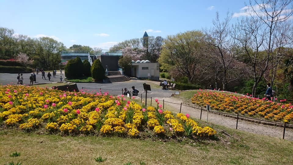 東山動植物園へ行ってきました!~桜の回廊編~_f0373339_16235203.jpg