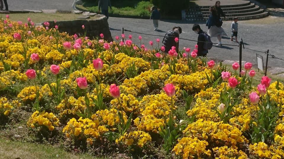 東山動植物園へ行ってきました!~桜の回廊編~_f0373339_16235285.jpg