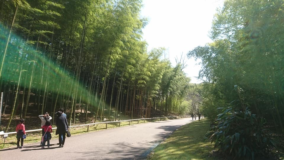 東山動植物園へ行ってきました!~桜の回廊編~_f0373339_16242033.jpg