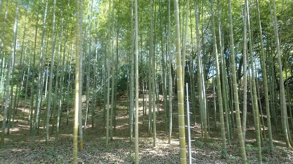 東山動植物園へ行ってきました!~桜の回廊編~_f0373339_16242036.jpg
