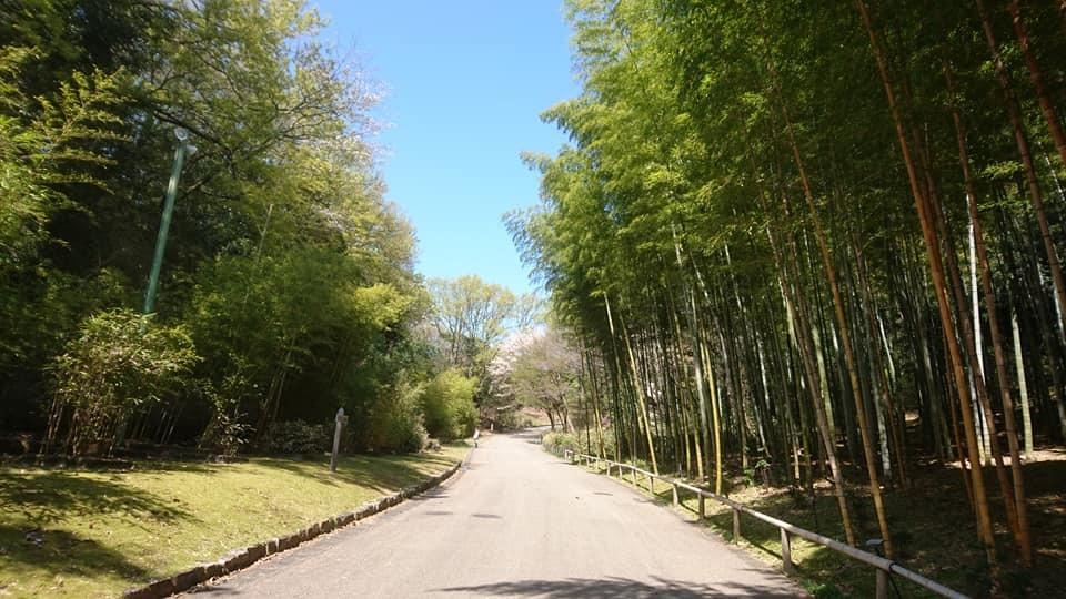 東山動植物園へ行ってきました!~桜の回廊編~_f0373339_16242078.jpg
