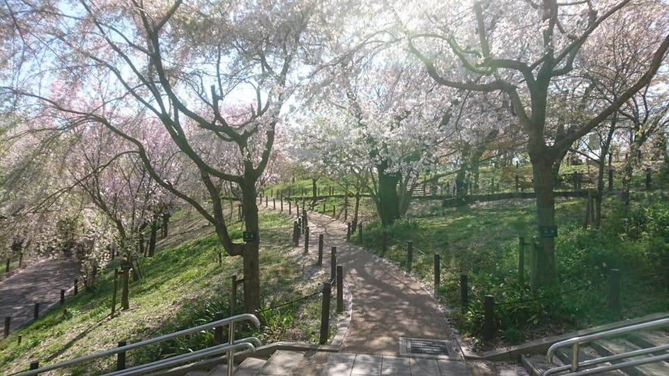 東山動植物園へ行ってきました!~桜の回廊編~_f0373339_16261624.jpg