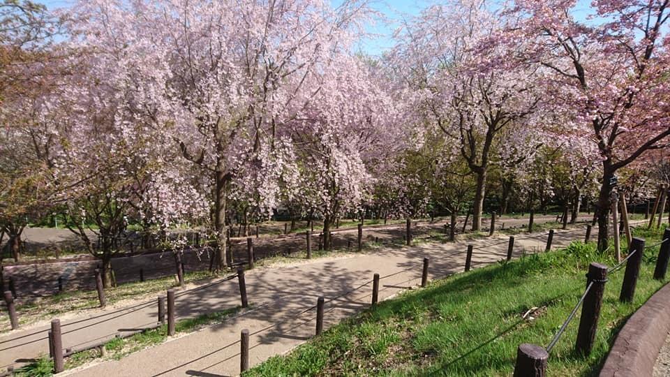東山動植物園へ行ってきました!~桜の回廊編~_f0373339_16261642.jpg