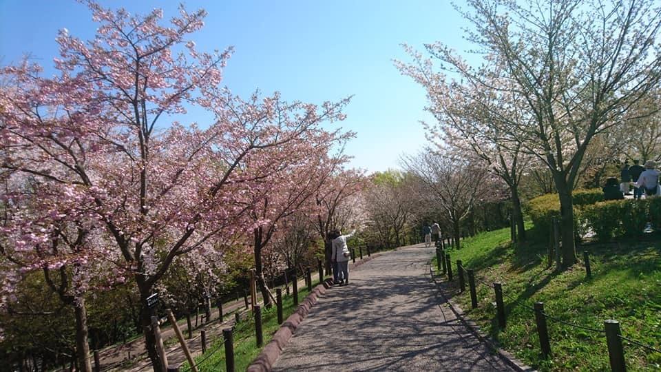 東山動植物園へ行ってきました!~桜の回廊編~_f0373339_16261697.jpg