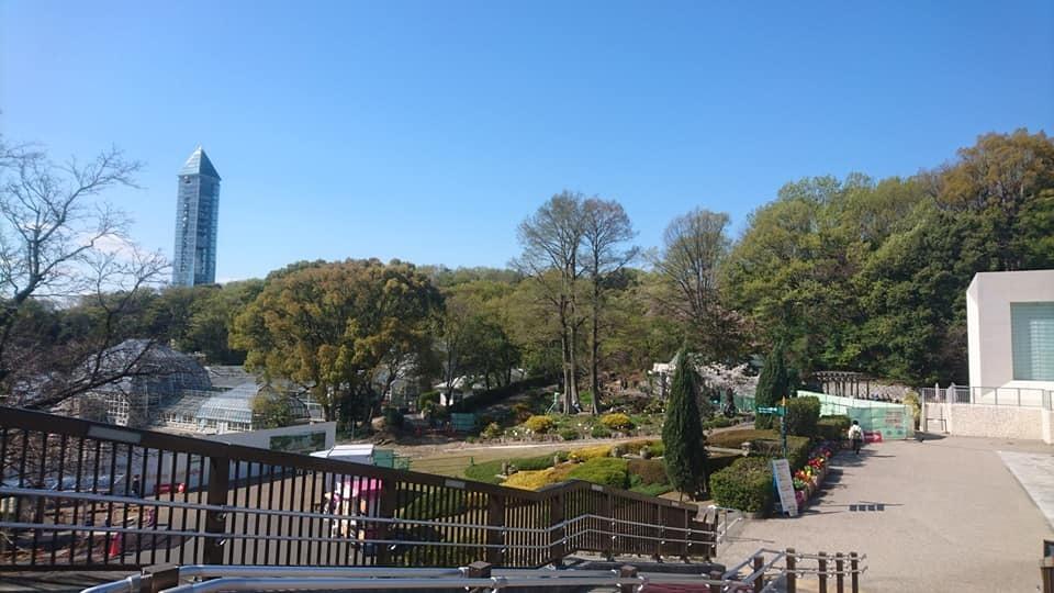 東山動植物園へ行ってきました!~桜の回廊編~_f0373339_16291801.jpg