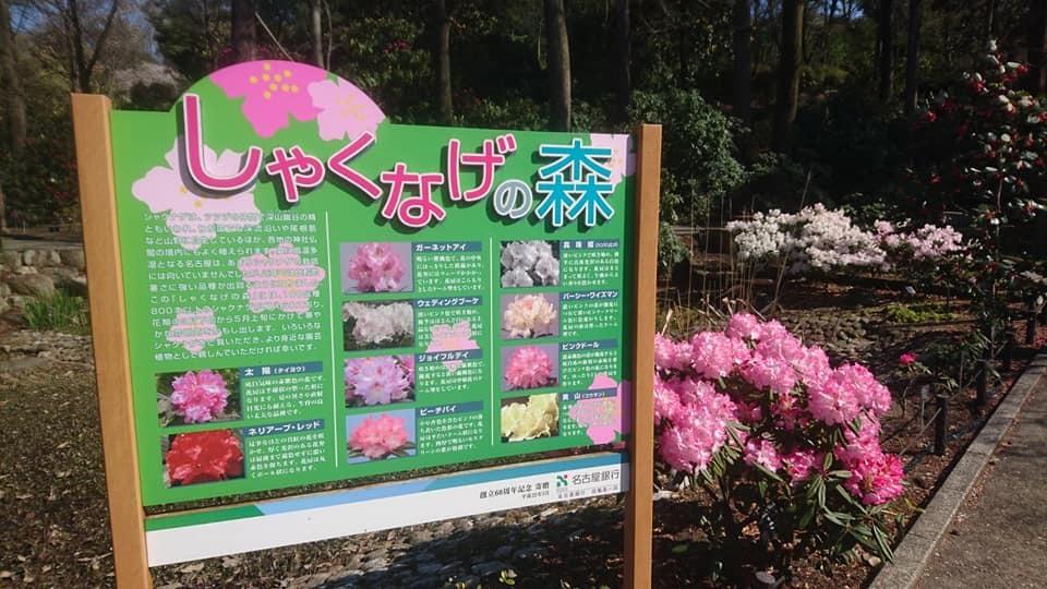 東山動植物園へ行ってきました!~桜の回廊編~_f0373339_16291975.jpg
