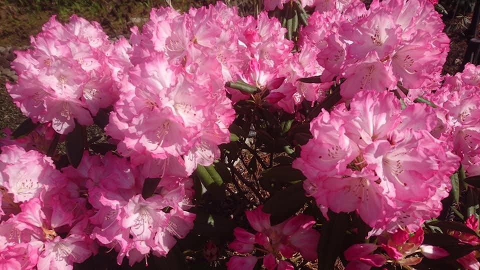 東山動植物園へ行ってきました!~桜の回廊編~_f0373339_16300154.jpg